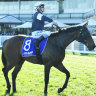 Melham looks to make up for close Caulfield call last year