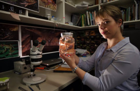 "Dr Jodi Rowley, an amphibian specialist, with a flying tree frog she named after her mother ""Helen's Tree Frog""."