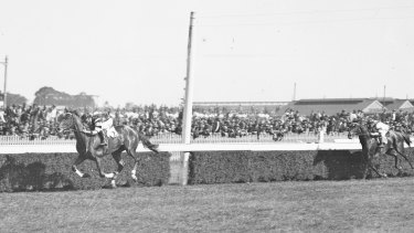 Phar Lap passes the finish post at Randwick races, Sydney, on October 9, 1929.