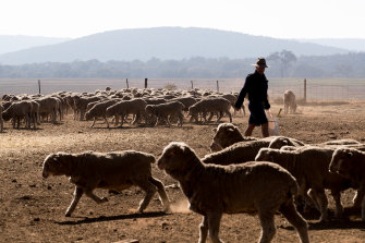 Dusty and dry conditions in regional NSW, where some of the state's biggest towns are trying to work out how they can keep their residents supplied with drinking water.