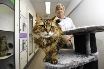 Cool for cats: Lexie the cat, who is resting before being put up for adoption, with Cat Protection Society CEO Ian Crook.