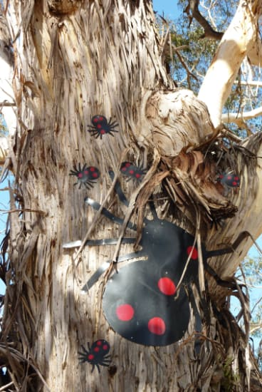 Beetles adorn a tree at the Warri rest area beside the Kings Highway.
