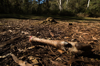 Deer remains left by hunters at Russell Hill and Carol Clay's last-known campsite.