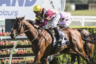 Fierce Impact will be set for this year's Cox Plate after his owners turned down a stud offer.