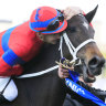 Mac attack essential if Waller is to have Elleegant sufficiency in Winx Stakes