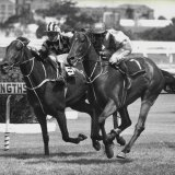 Bahroona Sahib scores at Rosehill in 1979