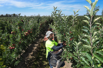 Victorian fruit growers will have to pay $2000 towards quarantine costs for each Pacific Islander worker under the latest scheme to attract seasonal staff.