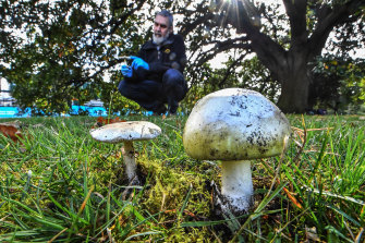 Mycology expert Dr Tom May with Amanita phalloides, the death cap mushroom.