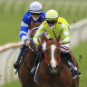 Eduardo makes Everest statement after Randwick meeting almost stopped due to COVID scare