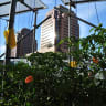 With farms atop malls, Singapore gets serious about food security