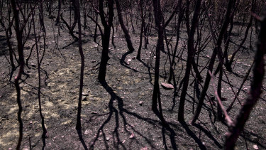This season's bushfires and hail storms have cost more than $2.1 billion in insurance already as economists warn the country will pay for the disasters with lower living standards long term.