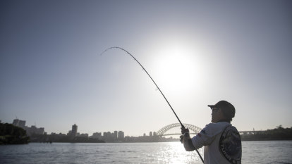 'A fish is a fish': Sydneysiders eating harbour fish despite warnings