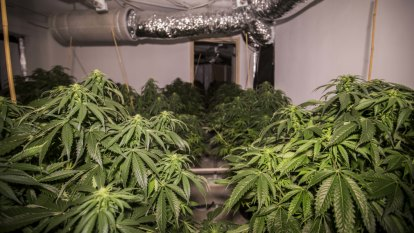 Spike in number of clandestine drug labs, cannabis grow houses in ACT