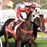 Mystic Journey shows she is on target for Cox Plate bid
