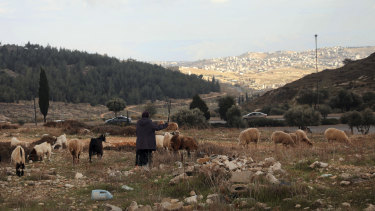 A Palestinian shepherd herds her flock at Givat Hamatos settlement in east Jerusalem.