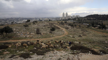 A Palestinian shepherd herds his flock at Givat Hamatos settlement in east Jerusalem.