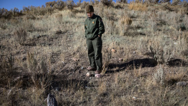 Ann Rodman, a scientist who works at Yellowstone, stands in a field of cheatgrass.