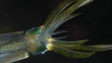 Researchers from the Queensland Brain Institute at UQ have created the most detailed maps yet made of the brains of reef squid.