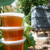 Honey produced from a backyard hive.