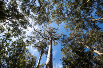 Native forests in the South West will be protected from 2024 in a commitment by the McGowan government.