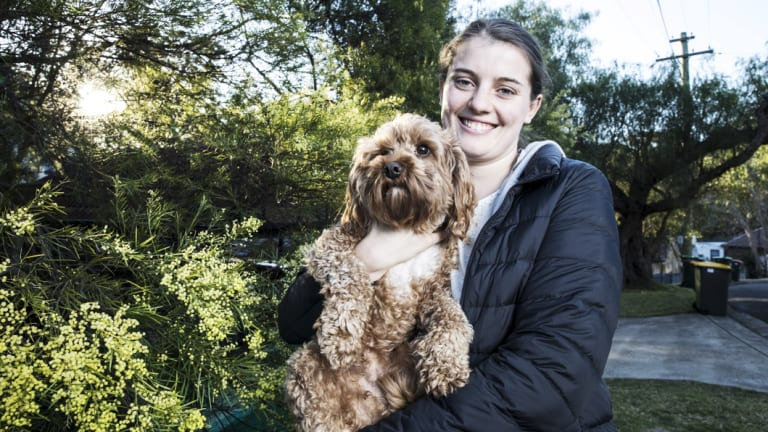 'Yellow dandruff': Ruby Shevlin and her dog Raffi with a wattle in full bloom at their Chatswood home ahead of National Wattle Day on September 1.
