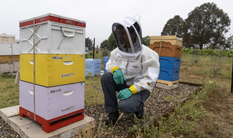 ACT government biosecurity vet Kyeelee Driver at the Jerrabomberra Wetlands