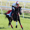 Lys Gracieux maintains grip on Cox Plate favouritism