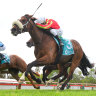 Wentwood, ridden by Harry Coffey, claims the Bendigo Cup.