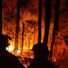 We need to be invest in more research about how to fight and prevent bushfires.