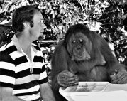 In 1986, at Singapore Zoo, Rob Morrison breakfasts with orangutan Ah Meng.