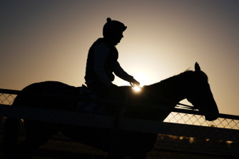 Danceteria at trackwork in Werribee.