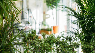 There's a reason why you want more plants in your home