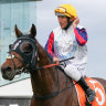 Ex-O'Brien colt Delphi can work the oracle for Australian owners