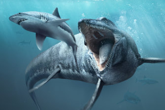 Mosasaurs were one of the apex predators of the ancient seas, even eating the large sharks which existed at the time.
