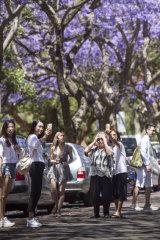 Tourists flock to MacDougall Street in Kirribilli to photograph jacarandas.