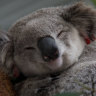 Historical Sydney estate heritage-listed to help preserve koala population