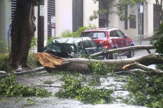 Tree branches came down on a car, blocking Northwood Street in Camperdown on Sunday.