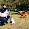 'Asking for an injury': Do smaller dogs need designated parks?