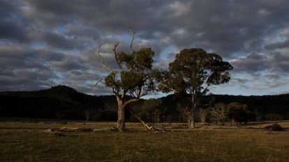 Government buys out Shenhua coal, curbs Dartbrook and opens up Wollar
