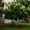 Which tree is best for your small garden? It depends on where you live
