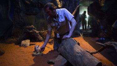 Paul Davies, Taronga keeper with nocturnal animals.