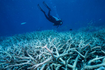 Coral bleaching of the Great Barrier Reef in the Port Douglas area in 2016
