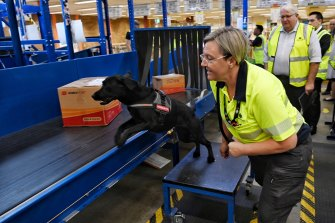 A sniffer dog inspects parcels on a conveyor belt that have been flagged by the 3D scanner.