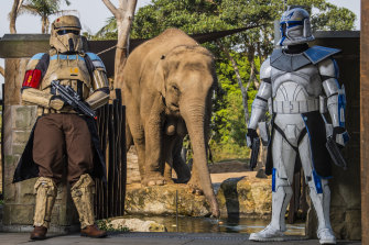 Dreamnight volunteers dressed as Star Wars characters in front of the elephant enclosure at Taronga Zoo.
