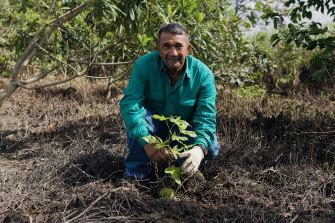 Len Parisi plants a tree on his land near Cairns.