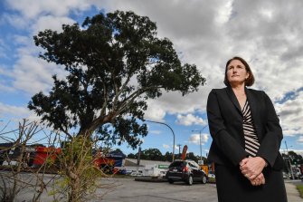 Manningham mayor Paula Piccinini wants this 'survivor tree' to be preserved.
