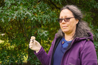 Senior mycologist Teresa Lebel with the offending fungus.