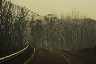 Burnt trees in the Jerrawangala National Park destroyed in the Currowan Fire, one of the biggest in NSW's history.