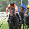 Orange crush: Lashes looms as one of the big chances in the second at Hawkesbury on Thursday.