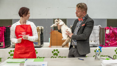 Judge Veikko Saarela, at right, examines a Ragdoll at the Australian Cat Federation's national show.